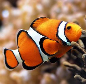 Pesce della Settimana